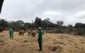 大象孤儿院