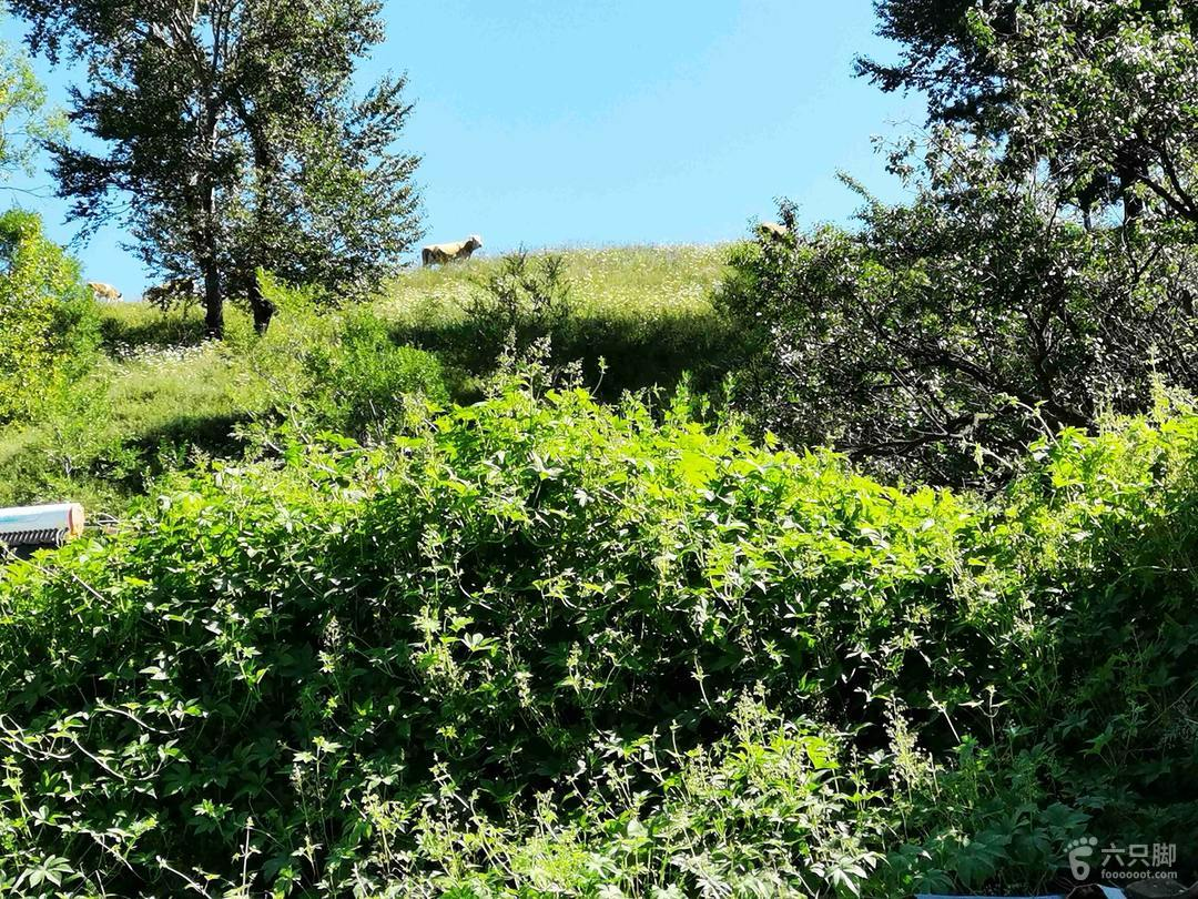 跑泉厂——箭杆沟——石板沟——黄土台穿越113