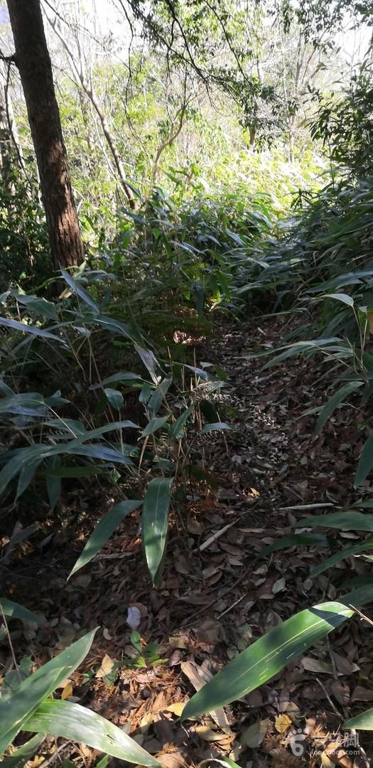 永嘉岩门下景区环线2